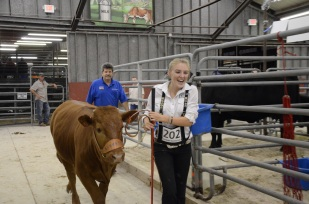 "Delanie Bartell, 17, was in tears after winning reserve grand champion in the 4-H beef breeding show. ""I wanted to win a belt buckle before I graduate next year,"" she said."